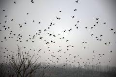 Cuervos del invierno Fotografía de archivo libre de regalías