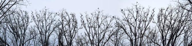 Cuervos en árboles Fotografía de archivo libre de regalías