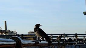 Cuervos en la barandilla