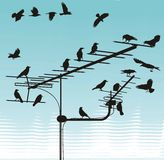 Cuervos en las antenas de la televisión Imagenes de archivo