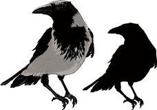 Cuervos negros Foto de archivo libre de regalías