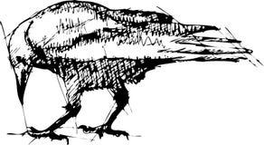 Cuervos Pen Drawing Foto de archivo