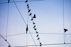 Cuervos que se sientan en el alambre Fotos de archivo libres de regalías