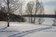 Cuesta apacible de la nieve con los árboles de abedul Foto de archivo libre de regalías
