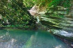 Cuesta boscosa cubierta con la hiedra y el musgo con la cascada que fluye abajo Foto de archivo
