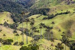 Cuesta de Bosque De Palma De Cera La Samaria San Felix Salamina Caldas Fotos de archivo libres de regalías