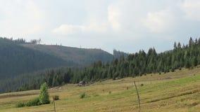 Cuesta de montaña despoblada de árboles Timelapse almacen de metraje de vídeo