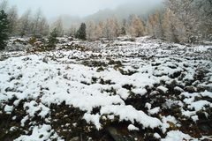 Cuesta de montaña escarpada con el bosque conífero imagenes de archivo