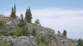 Cuesta de piedra con los árboles de pino almacen de metraje de vídeo