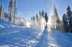 Cuesta del esquí con nieve y sol a través de los árboles Foto de archivo libre de regalías