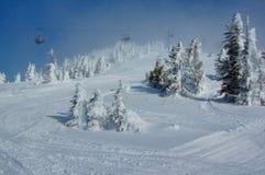 Cuesta del esquí en el bosque de la nieve Fotos de archivo libres de regalías