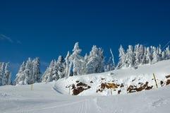 Cuesta del esquí en el bosque de la nieve Fotografía de archivo libre de regalías