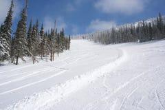 Cuesta del esquí en el bosque de la nieve en día de invierno asoleado Fotos de archivo
