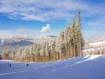 Cuesta del esquí entre bosque spruce en estación de esquí en Cárpatos Imagenes de archivo