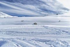 Cuesta del esquí gratis que conduce con los abetos en nieve imagen de archivo