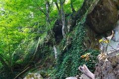 Cuesta rocosa con los árboles e hiedra en bosque meridional montañoso Imagen de archivo libre de regalías
