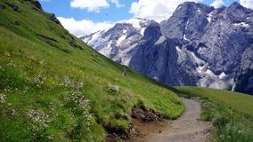 Cuesta verde con la trayectoria y las flores blancas con los picos nevosos en dolomías Fotos de archivo