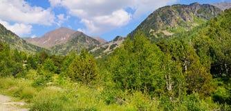 Cuestas de montaña pintorescas con las hierbas florecientes y los árboles coníferos Foto ancha fotos de archivo
