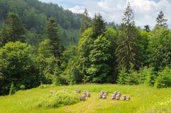 Cuestas de montañas, de árboles coníferos y y de colmenas de la abeja en la a Imagenes de archivo