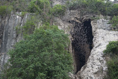 Cueva con millares de palos Battambang, Camboya Imágenes de archivo libres de regalías