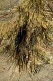 Cueva de Domica imagenes de archivo