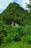 Cueva del bosque en la montaña, Krabi, Tailandia fotos de archivo libres de regalías