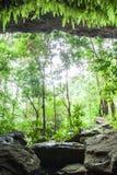 Cueva del misterio en bosque tropical, helecho enorme, musgo y liquen en la pared de piedra de la cueva El agua salpica con los á fotografía de archivo libre de regalías