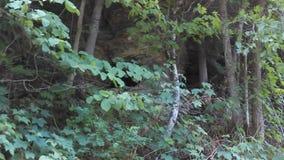 Cueva ocultada Foto de archivo libre de regalías