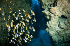 Cueva y pescados Fotos de archivo libres de regalías
