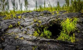 Cuevas de la lava de la reunión del la Imagen de archivo libre de regalías