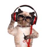 Cuffie del gatto fotografie stock