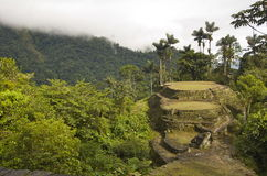 Cuidad Perdida. This is the view from the top terrace overlooking Ciudad Perdida (The Lost City) in Colombia.  It takes a 6-day hike through the jungle to arrive Stock Photography