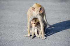 Cuidado da mãe do macaco para suas crianças fotos de stock royalty free