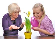 Cuidado de la madre y de la hija de la flor Imagen de archivo libre de regalías