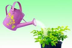 Cuidado de la planta Imagen de archivo libre de regalías