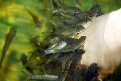 Cuidado de piel del balneario de los pescados Fotografía de archivo libre de regalías