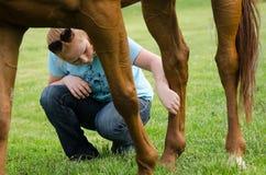 Cuidado del caballo Foto de archivo libre de regalías