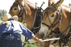 Cuidado del caballo Fotos de archivo