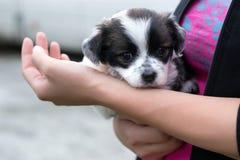 Cuidado del perrito fotografía de archivo libre de regalías