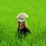 Cuidado del trabajador de campo del arroz su campo del arroz foto de archivo libre de regalías