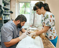 Cuidado dental de los veterinarios y de los dientes de perro Imagen de archivo libre de regalías