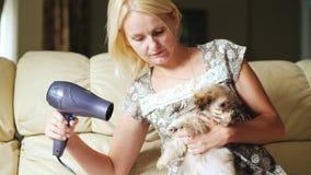 Cuidado do animal de estimação Uma mulher guarda um cachorrinho em sua mão, seca-a com um secador de cabelo vídeos de arquivo