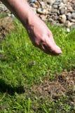 Cuidado do gramado Imagens de Stock Royalty Free