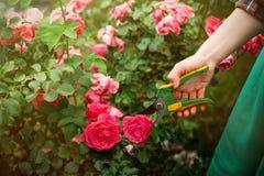 Cuidado do jardim Fotografia de Stock Royalty Free