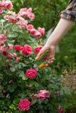 Cuidado do jardim Imagem de Stock