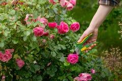 Cuidado do jardim Imagens de Stock