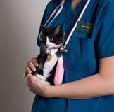 Cuidado médico animal Foto de archivo libre de regalías