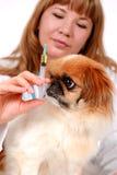 Cuidado médico del perro. Imagen de archivo libre de regalías