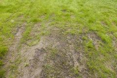 Cuidado mau do gramado Fotografia de Stock Royalty Free