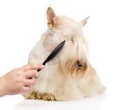 Cuidado para el pelo de perro Aislado en el fondo blanco Imágenes de archivo libres de regalías